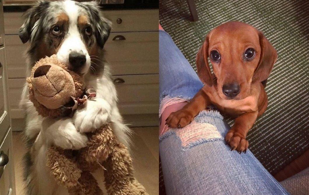 """Psi se evolučně přizpůsobili soužití s lidmi, výsledkem jsou """"smutné psí oči"""". Manipulují s námi němé tváře?"""