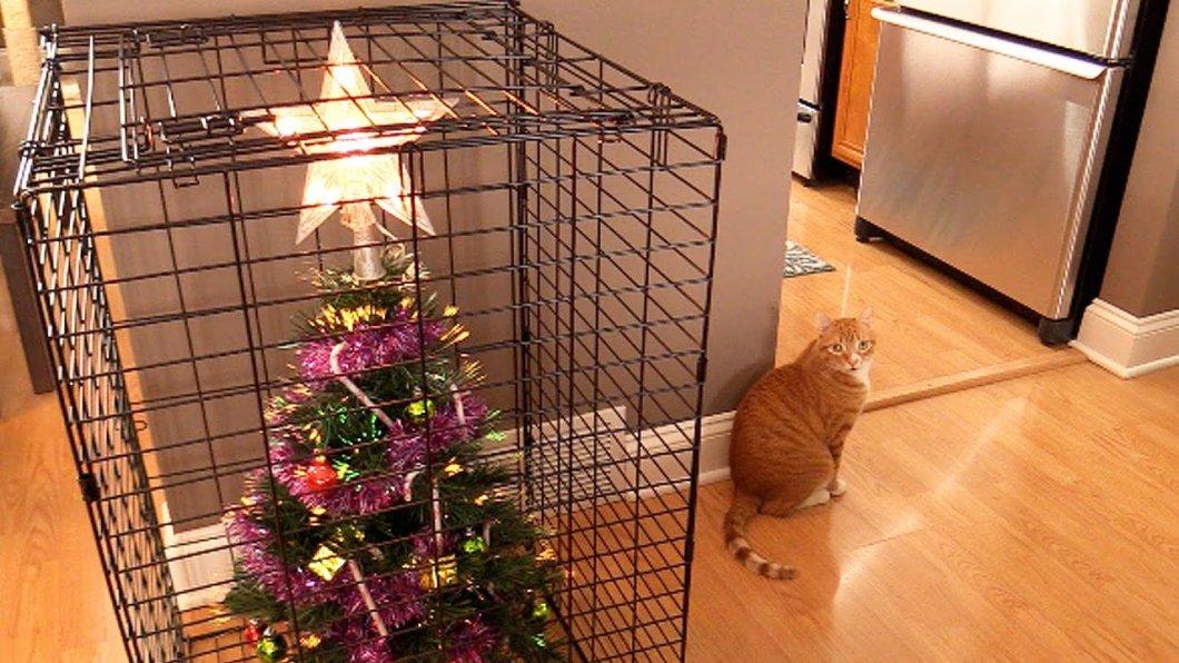 Jak ochránit vánoční stromeček před domácími mazlíčky?