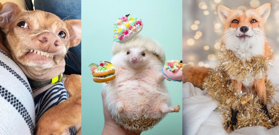 10 zvířecích celebrit Instagramu, které musíte znát. Bude i váš mazlíček vydělávat tolik jako tyto hvězdy světa zvířat?