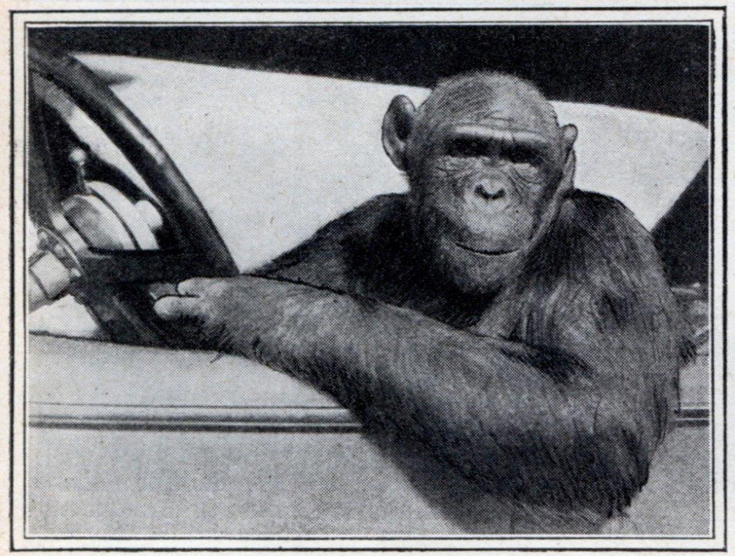 Opice jako řidiči a lety na Pluto aneb Předpovědi pro rok 2020, které se našim předkům moc nepovedly