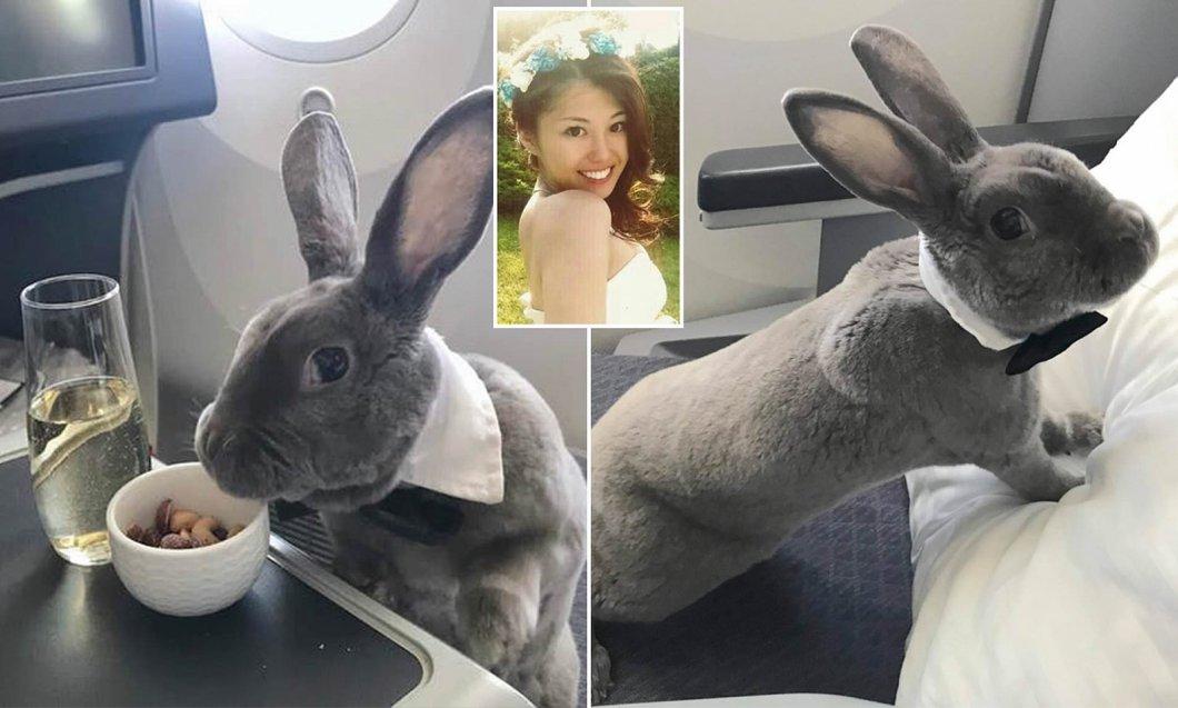 Naučte se užívat života od králíka. Ušák Coco cestuje letadlem, popíjí šampaňské a přikusuje croissanty