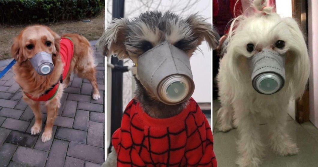 """Strach z koronaviru nutí lidi kupovat """"obličejové"""" masky i pro čtyřnohé mazlíčky"""