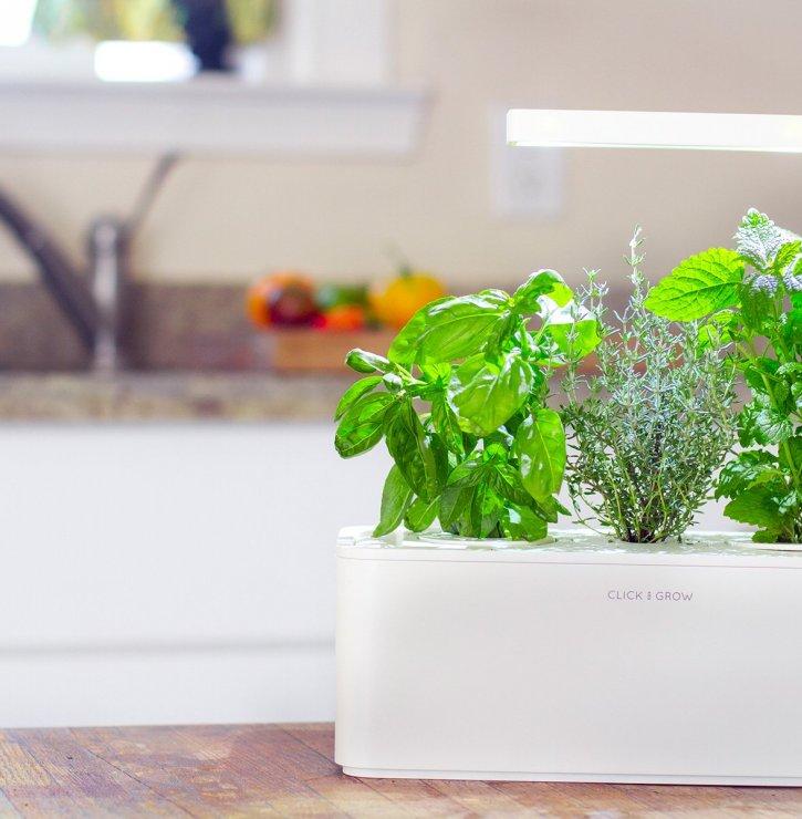 Moderní domácí zahrádka aneb Aktuální trendy, které hýbou světem pěstování rostlin